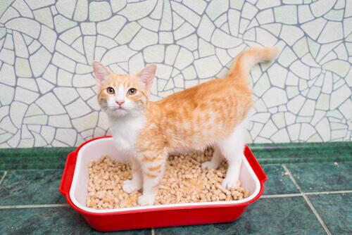 areia-gato1