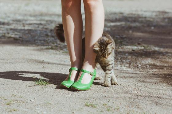 comportamento-gatos-inteligentes-2