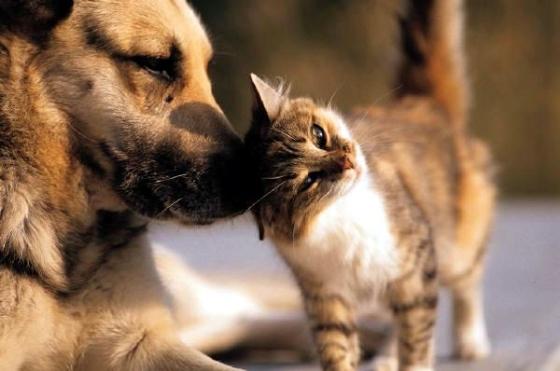 gato-cachorro-grande.jpg