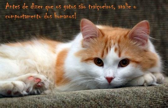 349572-Gato+Amarelo+e+Branco+no+Sofa