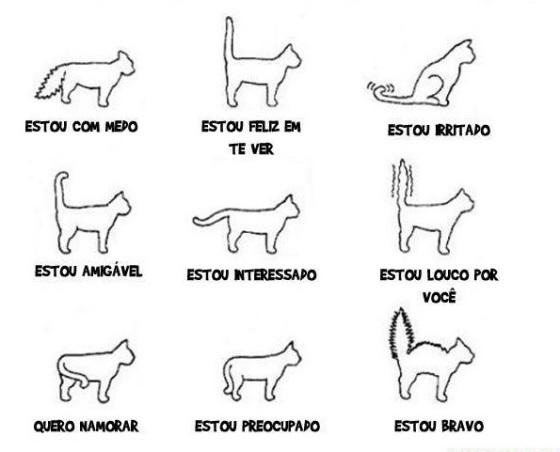 Entender-o-seu-gato-1