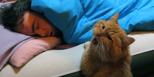 gato_despertador_01